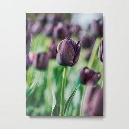 Black Tulip Metal Print