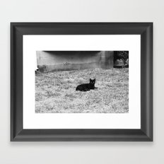 CATastrophic. Framed Art Print