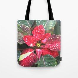 Raindrops on a poinsettia Christmas flower Tote Bag