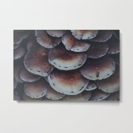 Autumn mushrooms. Dutch Nature. Holland. Netherlands. Fine Art Travel Print. Wall Art. Metal Print