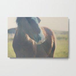 wild ponies print Metal Print