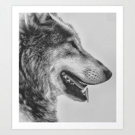 Timber Wolf Art Print