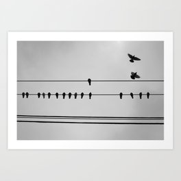 pigeons hanging out Art Print