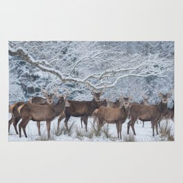 Red deers  from wintry Killarney National Park Rug