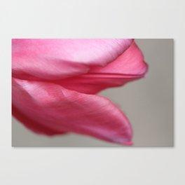 Tulip Petals' Grace Canvas Print