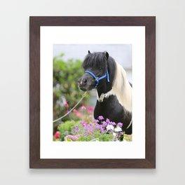 Floral Pinto Framed Art Print