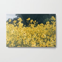 Daisies For Days Metal Print