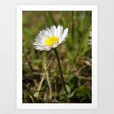 Daisy... Art Print