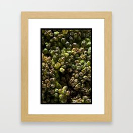 SPROUT #1 Framed Art Print
