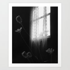 Window Flowers Art Print