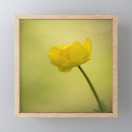 Yellow Globeflower On A Green Bokeh Background #decor #society6 #homedecor Framed Mini Art Print