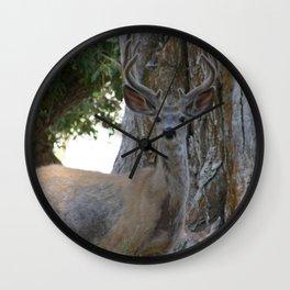 Mule-tail Deer, Buck in Velvet Wall Clock