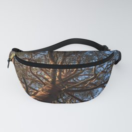 An old pine. Fanny Pack