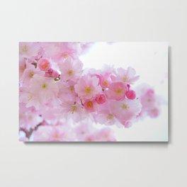 Pink Japanese Cherry Tree Blossom Metal Print