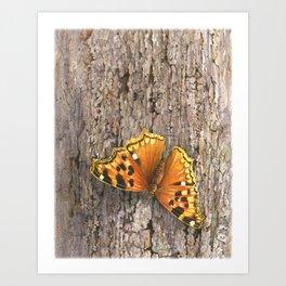 Compton Tortoiseshell Butterfly Art Print