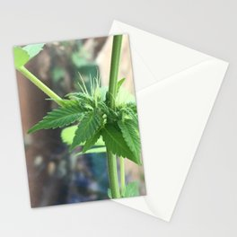 Cannabis Cluster Stationery Cards