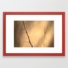 Thorns and Grass Framed Art Print