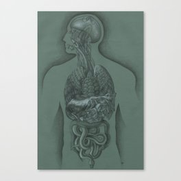 Animal Anatomy Canvas Print