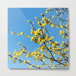boom boom bloom Metal Print