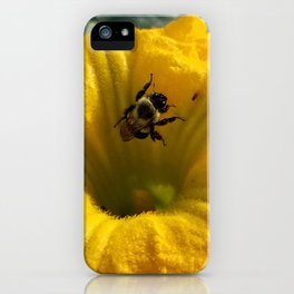 Pollen collecting in a pumpkin blossom iPhone Case
