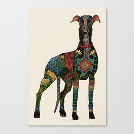 greyhound ivory Canvas Print