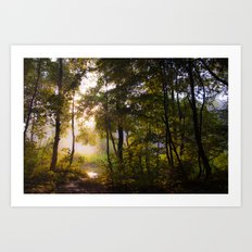 Dawn in the forest Art Print