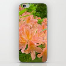 rhododendron bloom iPhone & iPod Skin
