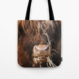 Highland cow feeding on straw on a frosty winters morning. Norfolk, UK. Tote Bag