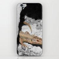 lizard iPhone & iPod Skins featuring Lizard by Anja Kidrič AdAk