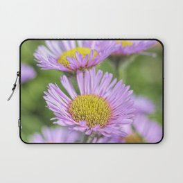 Aster pink daisy flowers in soft focus Laptop Sleeve