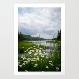 Boundary Waters Wildflowers Art Print