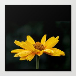 Bright Yellow And Black Canvas Print