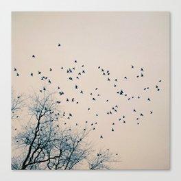 Restless Canvas Print