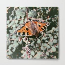 Schmetterling Metal Print