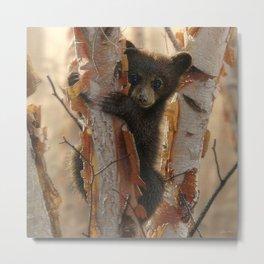 Black Bear Cub - Curious Cub II Metal Print