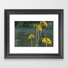 Tawny Framed Art Print