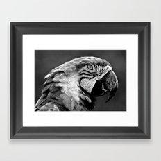 Black & White Parrot  Framed Art Print