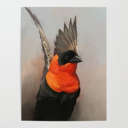 Red Bishop Bird Poster