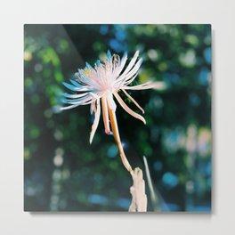 Orchid Cactus Metal Print