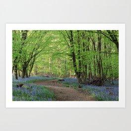 Beech and Bluebell Walk Art Print