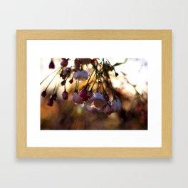 Catch the Morning Light Framed Art Print