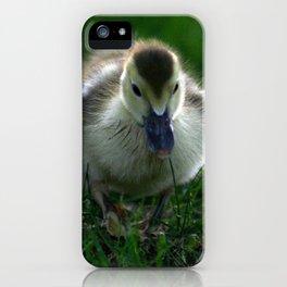 Cute Duckling Walking on a Lawn iPhone Case