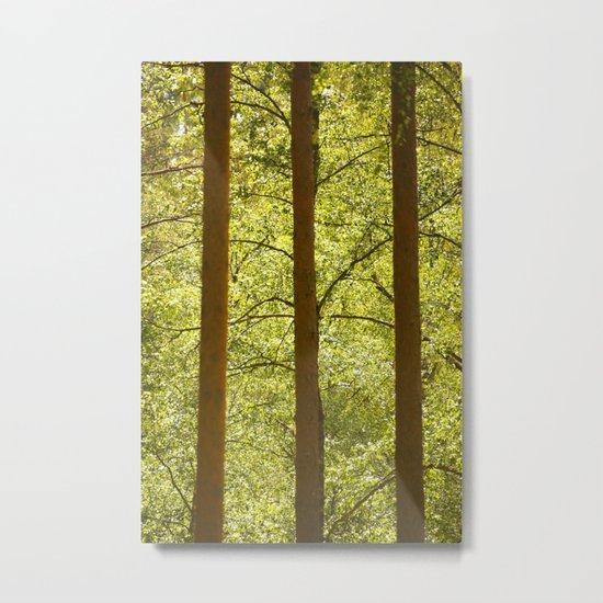 Three Tree Trunks  Metal Print