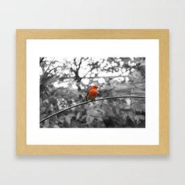 Red bird Framed Art Print