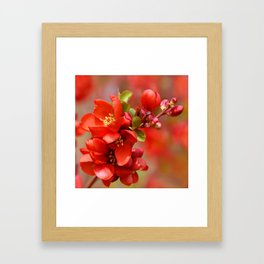 Red 95 Framed Art Print