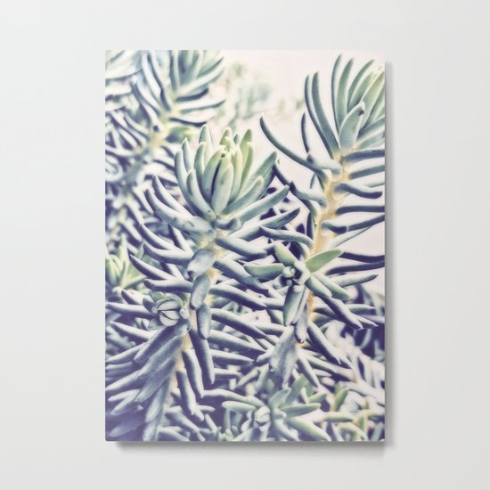 Sunday Morning Succulents Metal Print