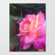 Roses in Rhode Island Canvas Print