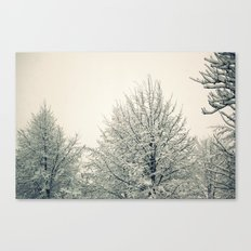Sugar Coated Canvas Print