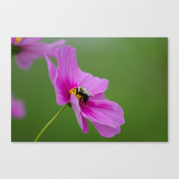 Bee on Cosmo Canvas Print