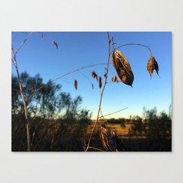 sunset leaves Canvas Print
